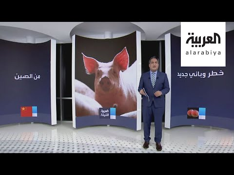 شاهد وباء آخر يهدد البشرية ينتقل من الخنازير للإنسان